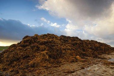 Pferdemist in Biogasanlage