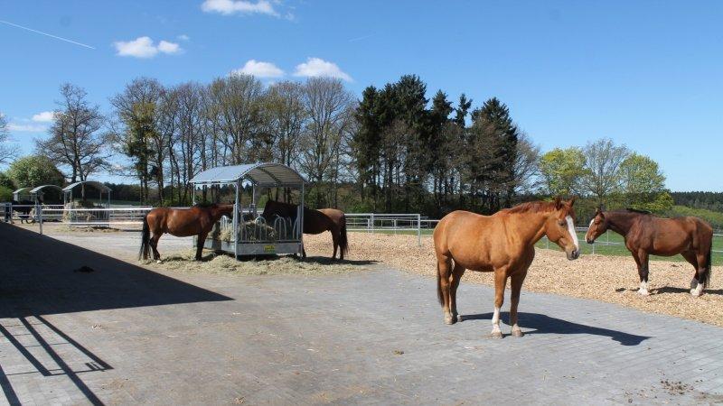 <br><p><b>Die ersten Pferde ziehen ein, Haltungskonzept, Arbeitsprozesse und Marketingkonzept greifen ineinander (und bewähren sich in der Praxis). Kunden und Pferde fühlen sich wohl.</p></b>