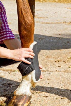 Dienstleistung am Pferd
