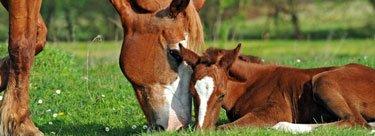Wir machen uns stark für einen pferdegerechten Umgang
