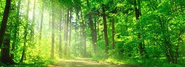 Ein schonender Umgang mit der Natur.