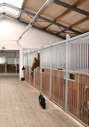 Förderung von Betriebsberatungen für Pferdebetriebe