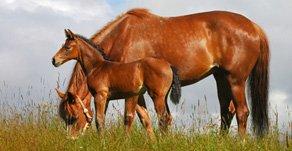 Businessplan für Pferdebetriebe